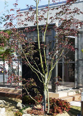 奈良店 植栽展示